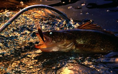 The Thrill of Summer Walleye Fishing On Green Bay