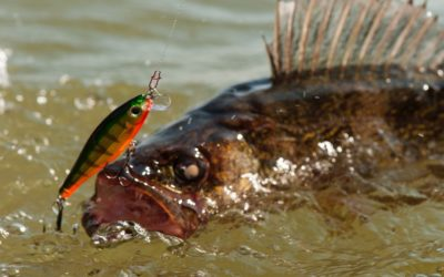 The Best Baits For Freshwater Fishing