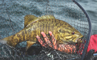 What Makes These Spots Great For Catching Smallmouth Bass In Door County?